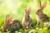 JooWI Online wünscht schöne Ostern & News
